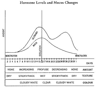 Mucus changes during menstrual cycle