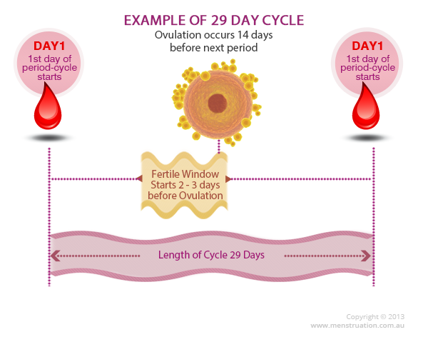 Charting the menstrual cycle basic information menstrual cycle diagram showing days ovulation and bleeding ccuart Image collections
